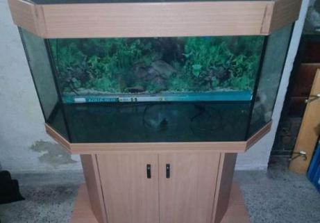 Aquarium avec armoire 2