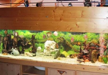 aquarium 720 litres 1