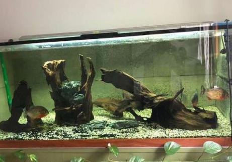 Aquarium 1400 L 2