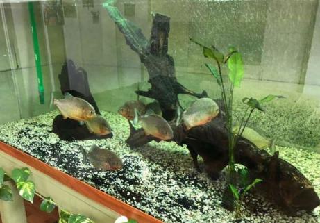 Aquarium 1400 L 3