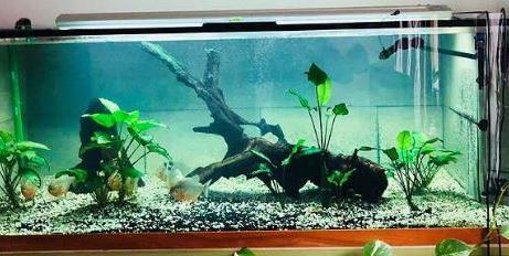 Aquarium 1400 L 4