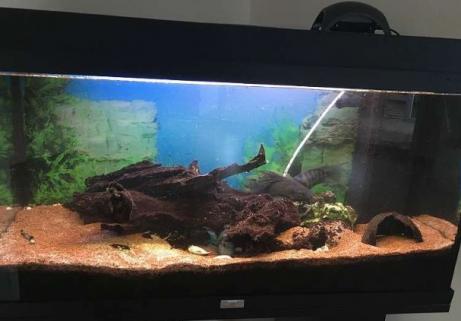 Aquarium 120l 3