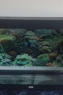 JEWEL 360L Aquarium