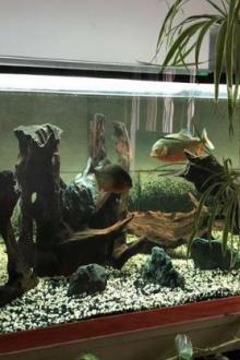 Aquarium 1400 L